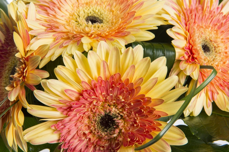 E-shop s květinami
